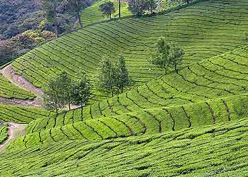 TRAVEL: MUNNAR ATTRACTIONS