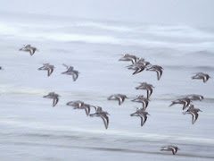 Burung-burung