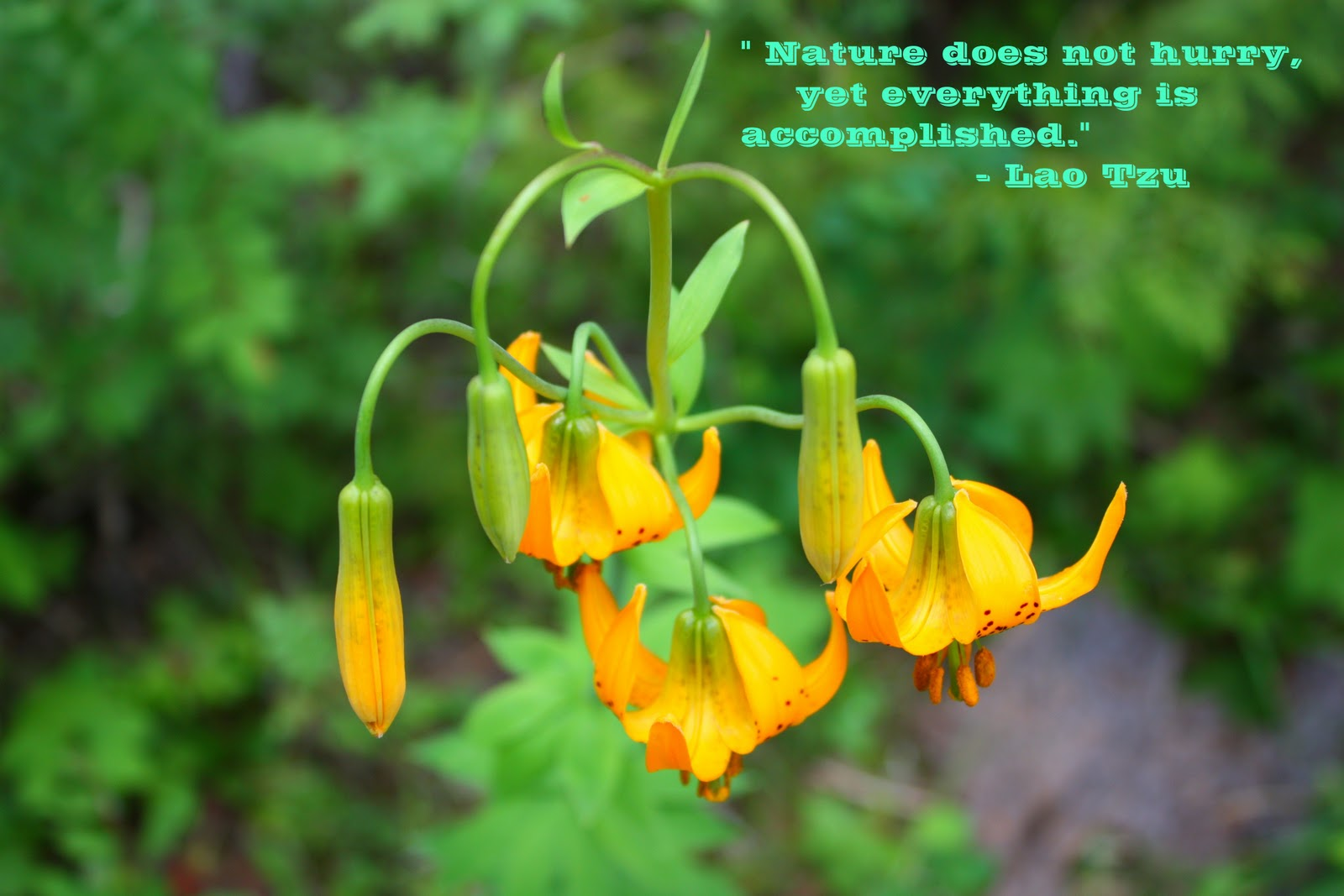 Flower Quotes And Sayings QuotesGram
