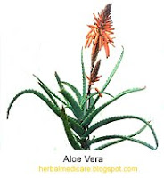 aloe vera to cure constipation