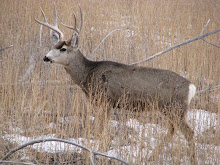 Nice Mulie