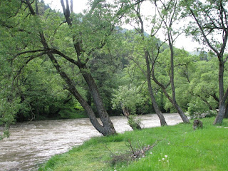 Copaci la un mal de riu