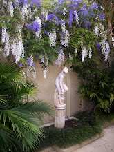 Purple Wreath Vine entwined with White Wisteria