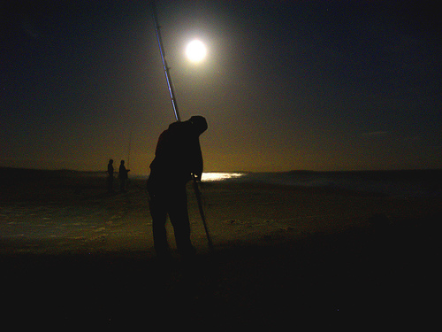 Image result for night surf fishing