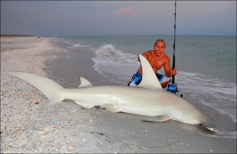 Daven 39 s blog november 2010 for Shark fishing in florida