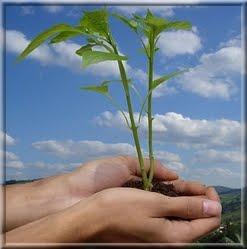 """""""Plante uma árvore."""""""