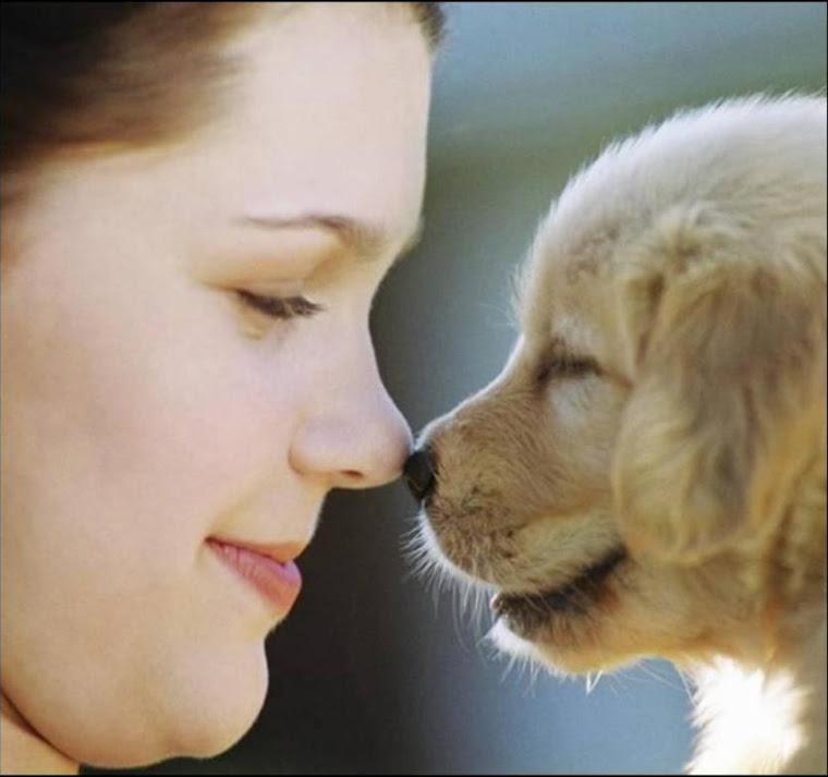 Proteção e Respeito aos animais