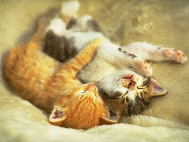 makeup kittens
