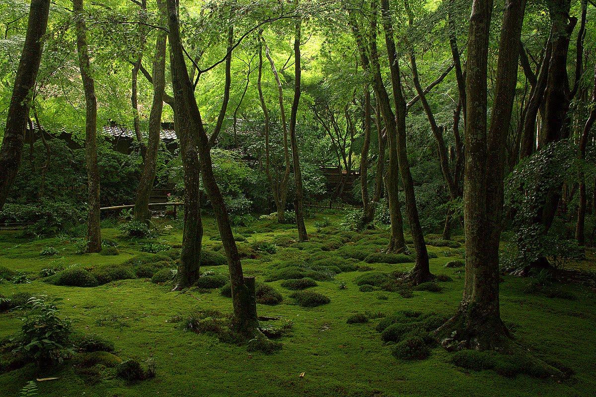 Travels in japan saga arashiyama - Moosgarten kyoto ...