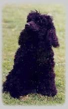 Janca, min andre puddel 1974