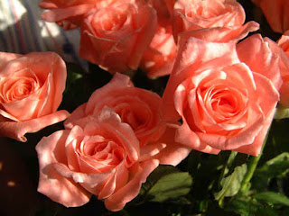 http://1.bp.blogspot.com/_xJBGs-6T4EE/S0j8E2mHC_I/AAAAAAAAAVE/XM_WrnsAZ9E/s320/park+rozsa.jpg
