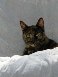 Cat 1 - Syd