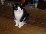 Cat 3 - Spike