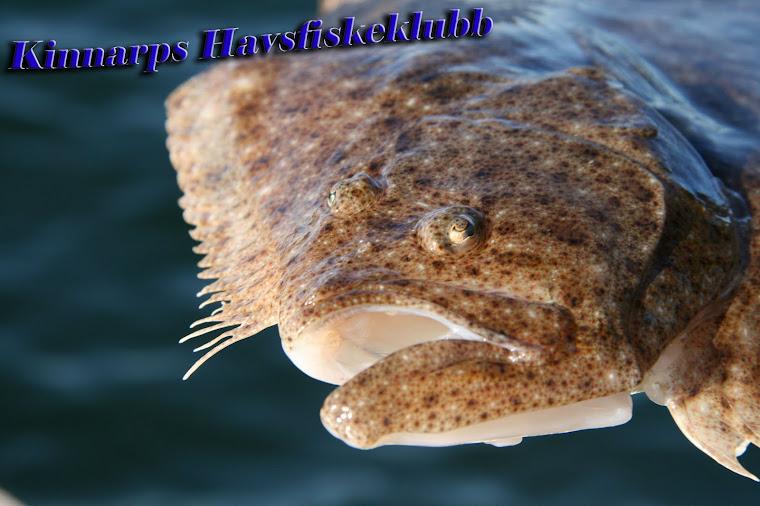 Kinnarps Havsfiskeklubb