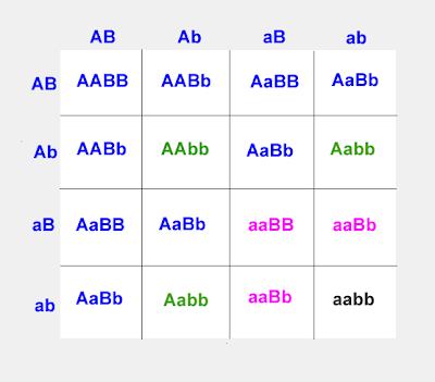 Blood Type Crosses Worksheet | Free Printable Math Worksheets - Mibb ...
