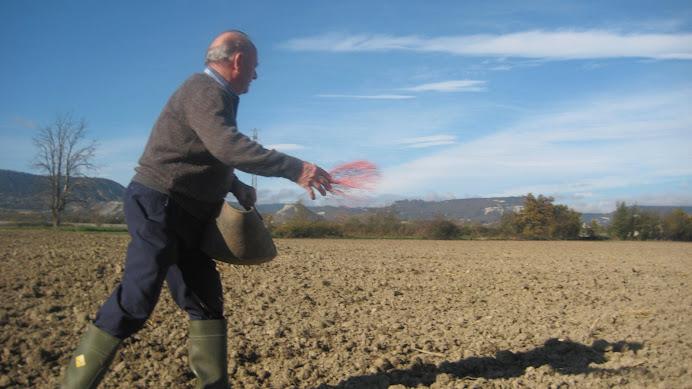 En Ton del Verdaguer sembrant el blat