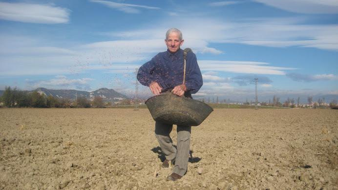 En Josep de Pratdesaba sembrant el blat