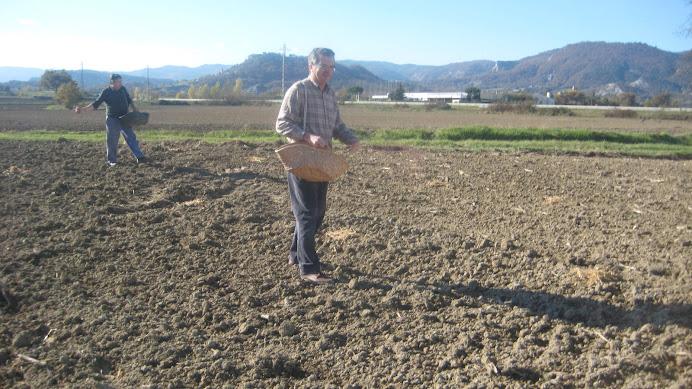 En Miquel de la Torre d'en Bru (estat) i en Joan de la Fàbrica  sembrant el blat