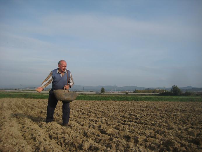 En Ton sembrant el blat