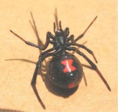 Which artist got a black widow spider tattooed on her arm?