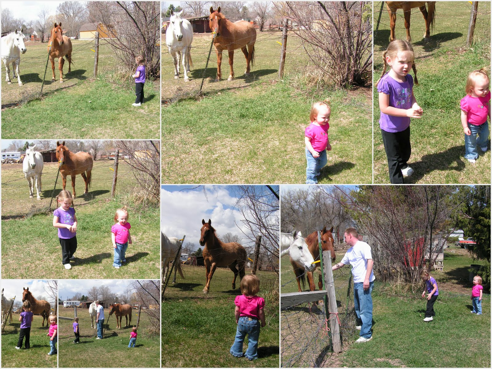 Most Inspiring   Wallpaper Horse Collage - 4-17-101  Perfect Image Reference_182071.jpg