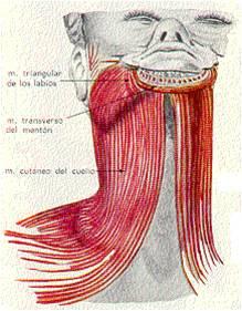 20 de agosto de 2017: Cientificos logran mejorar cuello al 93%