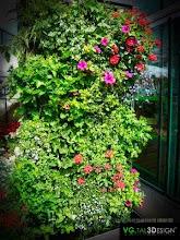 """Modules """"plantes annuelles"""""""