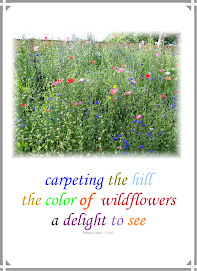 Wildflower haiku