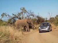 Pilanesberg National Park, 6 juli 2009; wij reden ook in zo'n Toyotaatje Yarusje