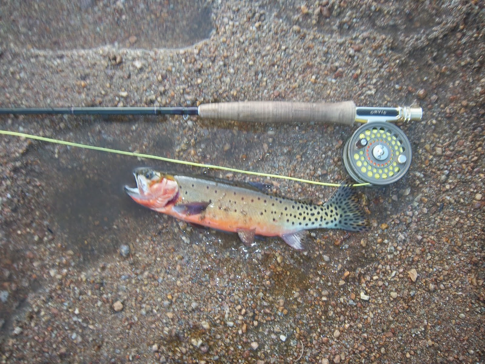 Grobe anglers and adventures lawn lake rocky mountain for Roaring river fishing hours