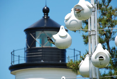 Click to enlarge. Plum Island Lighthouse behind a Purple Martin house.  These structures are designed after the hanging gourds that our forefathers used to attract Purple Martins.  ©2008 SmellsLikeGrape