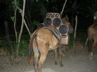 Mule With Crazy Car Stereo System