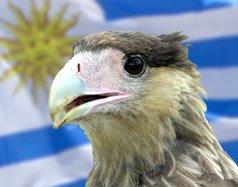 Biodiversidad en Uruguay