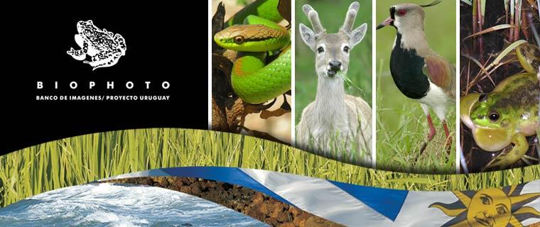 Biophoto Uruguay