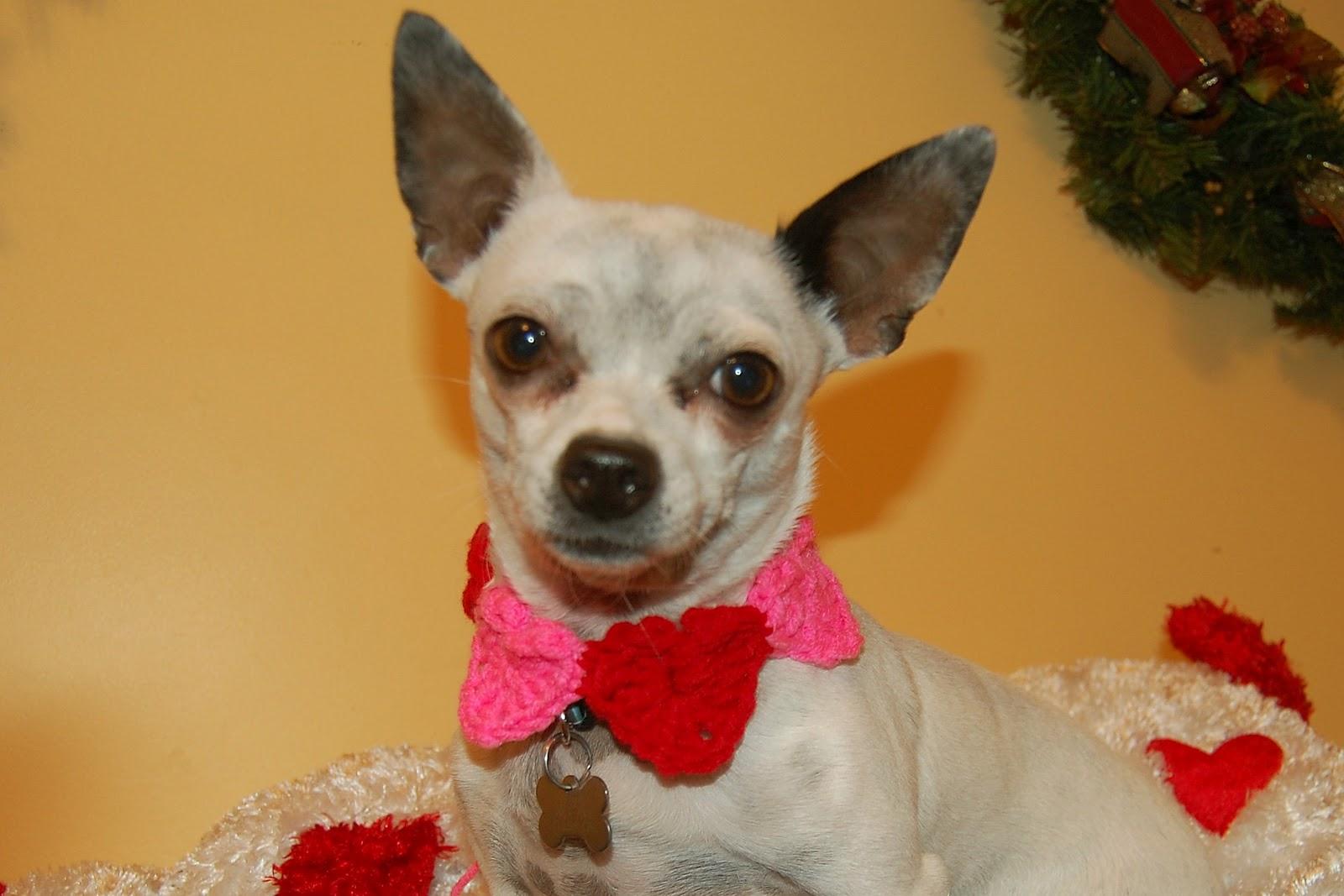 Posh Pooch Designs Dog Clothes: ???Conversation Hearts Dog ...