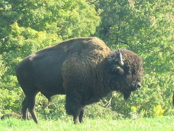 [Buffalofarm3]