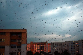 Swiftlet dark sky in Penang