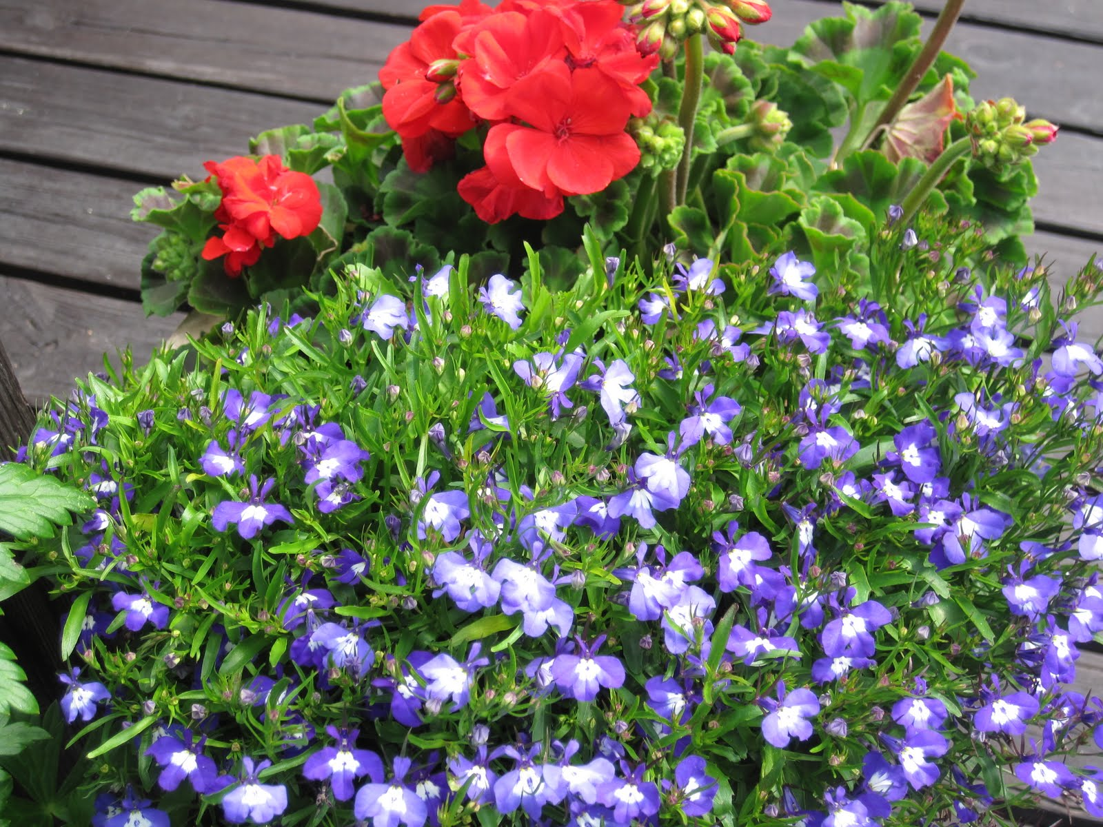 blommor ute sommar