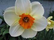 J'aime beaucoup voir fleurir mes fleurs de printemps