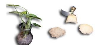 Amostra Grátis Cristais para plantas