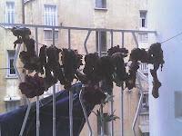 قديد   لحم  مرقد في توابل  ويتعلق في الشمس Gueddid
