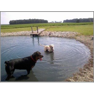 Abby and Doc swimming
