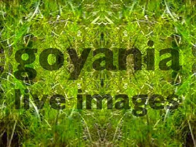 goYania live images