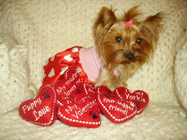My Doggie And Me spokes yorkie Precious
