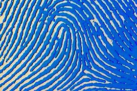 Fakta tentang sidik jari manusia