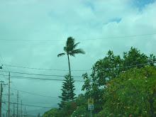Hurricane Felicia