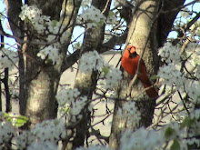 Cardinal looking around