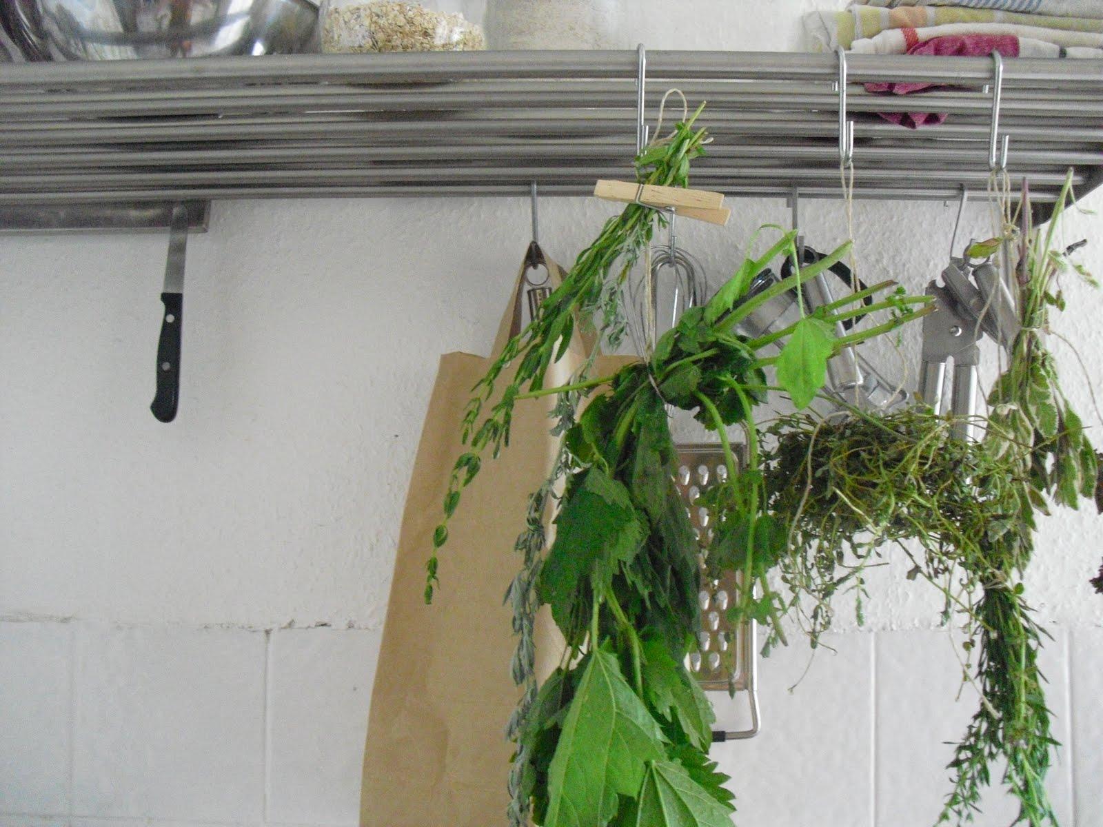 mauerblumen: juli 2010