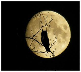 buho a la luz de la luna