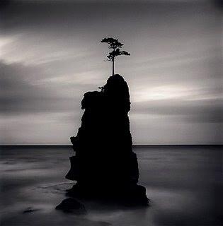 arbol isla mar